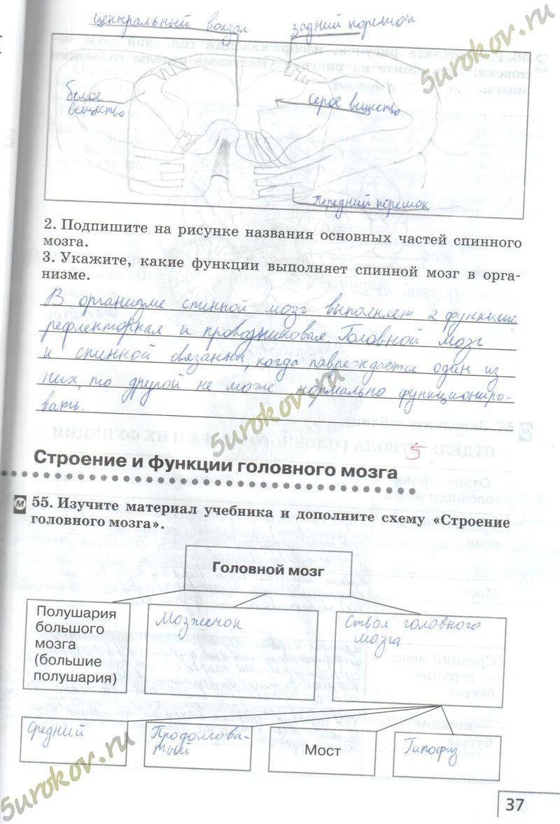 Гдз по биологии 8 класса сонин агафонова